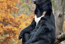 Bear Bjørn