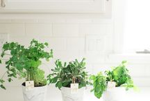 Green Thumb / by Danielle Carver