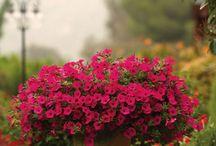 ogród w pojemnikach