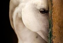 Horses / by Melissa Manns Smith