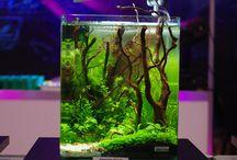Planted aquariums / Live aquatic plants aquarium design