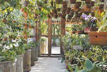 Orquidários / Greenhouse