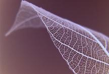 Leaves / by Robynne Kilborne Blake