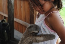 Animals - Sloths in Costa Rica / Who doesn't want sloths, arguably one of the cutest animals in the world, in your Pinterest feed?  Both two and three toed sloths can be spotted daily at Tulemar Vacation Homes in Costa Rica.  Come visit us sloth lovers!  www.4tulemar.com