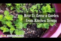 How My Garden Grows