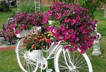 kvety bicykel