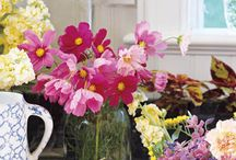 Mother's Day Gifts & Flower Ideas
