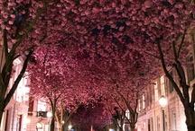 ulice, street