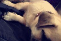 My pug