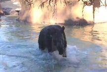 Videos / by Los Angeles Zoo