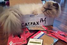 What is Catpax? / Photos of clients enjoying the earthly delights of a Catpax subscription box.