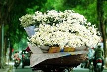 Flower transport