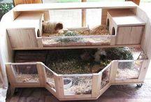 Guinea pig house / Yuik yuik