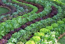Moestuin / Groente, fruit, eetbare tuin