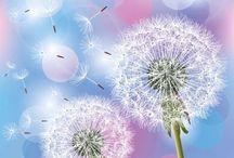 одуванчики | dandelions / Одуванчик, как признак настоящей весны...
