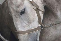 cavalli :3