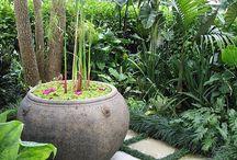 Potplant garden