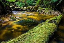 Naturaleza Bosque