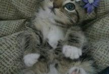 Tiernos y Hermosos Gatitos