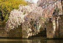 Proposing in Cambridge