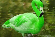 Animais verdes