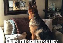 Sheppy