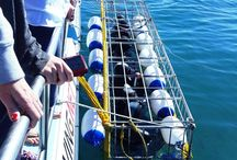 Shark Cage Diving / Shark cage diving with Gordon's Beach Lodge, Beachfront accommodation in Gordon's Bay Find out for any specials running! Ph +27 (0)21 856 3519 email info@gordonsbeachlodge.co.za