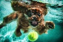 animais / os animais mais bonitos da internet estão aqui