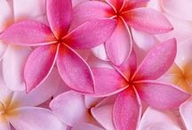 Flowers / ❤️