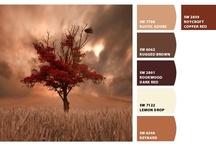 Colour Palets / by Jacqueline de Vos