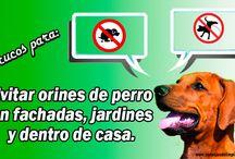 AHUYENTAR LOS PERROS QUE SE ORINAN FRENTE A TU CASA / Una causa muy común de conflictos vecinales, aprende como evitarlo.