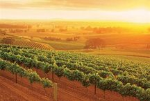 Australian Wine Country