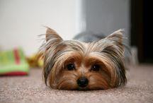 Puppy Luuuuuv