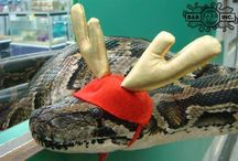 B&B Pet Stop: Reptiles