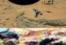 Animals on Mars / Animals on Mars