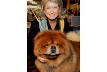 Celebrity Pets / by Kimberly Chappell