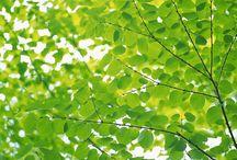 Tree Facts
