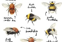 All kind of bee's