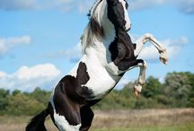 Horses :)) / by Donna