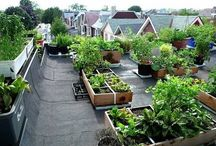 Roof top gardens / Green skylines