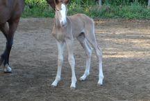 Allevamento Cavalli / Questa bacheca contiene foto dei cavalli allevati dalla azienda agricola agrituristica Piana Arborello