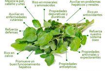 Beneficios de verduras