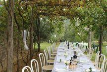 weddings / shots of the most beautiful weddings