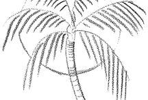 Draw palm tree