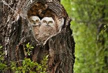 owls / by Belinda Fischer Angell