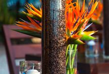 AF: TROPICAL EVENT / GET INSPIRED WITH DIFFERENT NATURAL ELEMENTS FROM THE TROPICS