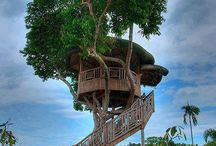 Tree Houses / Tree houses and human nests.