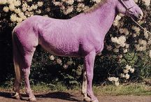 Animal coloration