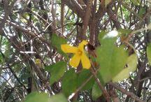 꽂, Flower