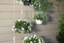 White hanging baskets